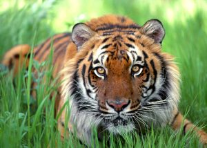 Importance of Sundarban to Bangladesh