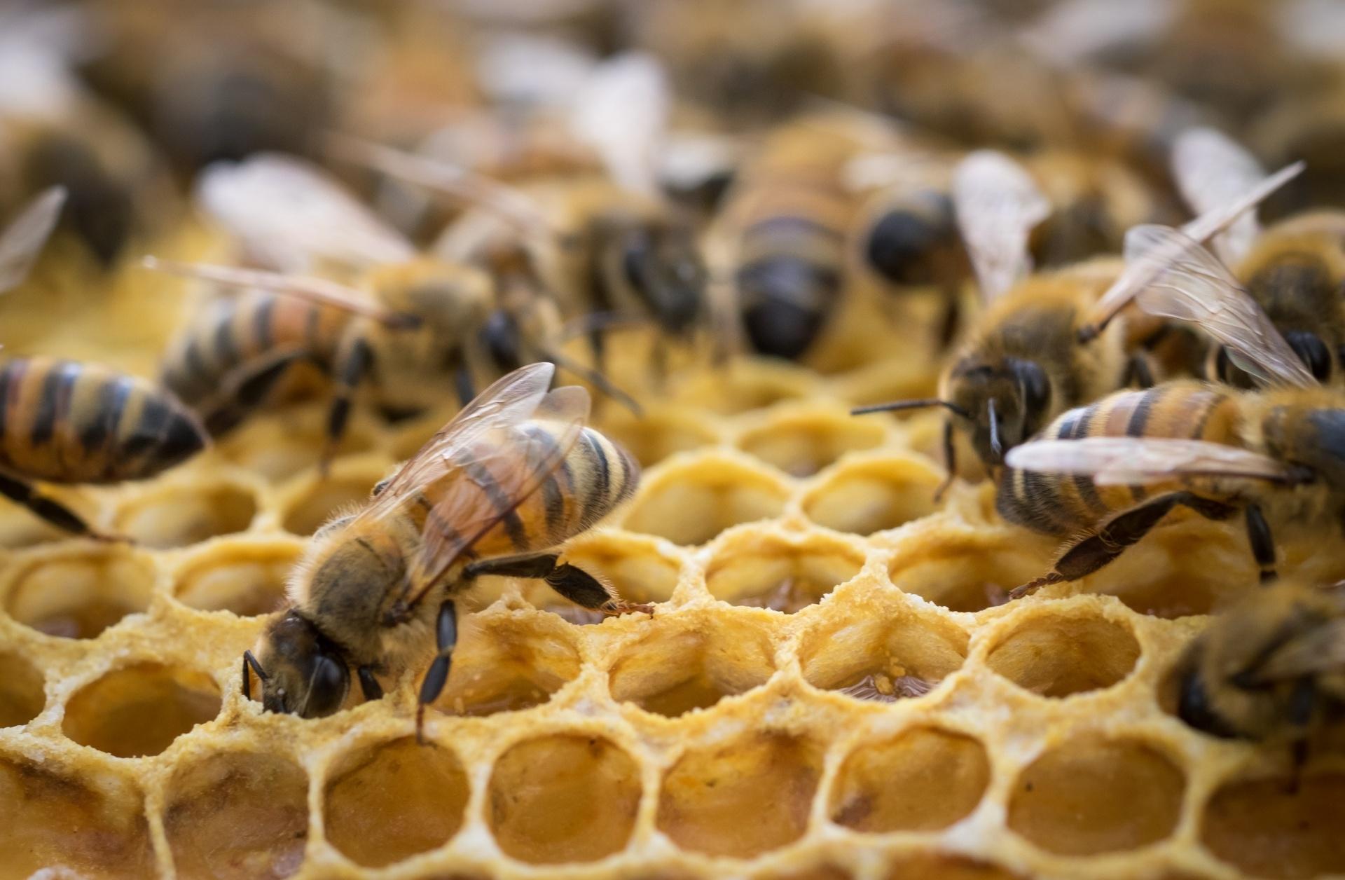 Hive Mind: discovering natural intelligence